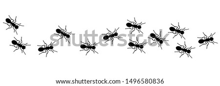 Insect Insects ant ants emmet pismire banner Vector icon icons sign signs fun funny A line of worker workers ants marching search Silhouette banner logo Random Seamless Pattern Representing Teamwork