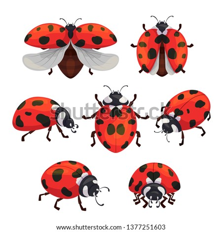 insect ladybird set  cute small