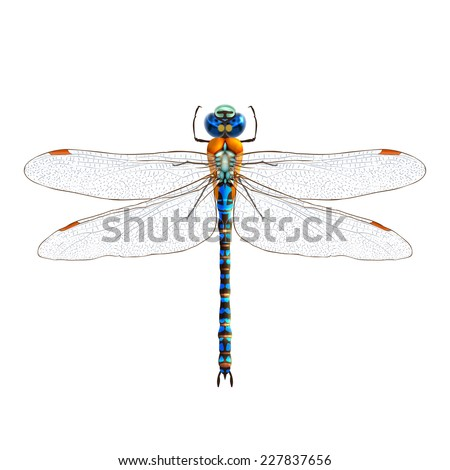 insect realistic dragonfly