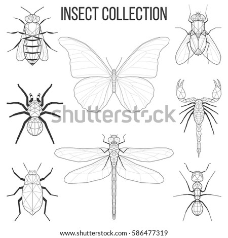 insect set bee  fly  butterfly