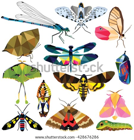 insect set colorful low poly