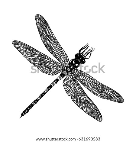 insect stipple drawing isolated