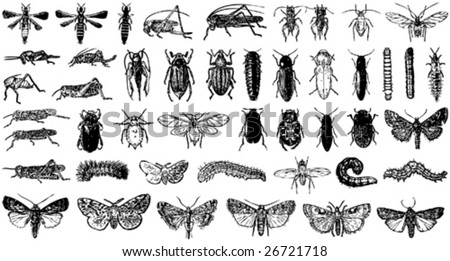 insect vector collection a