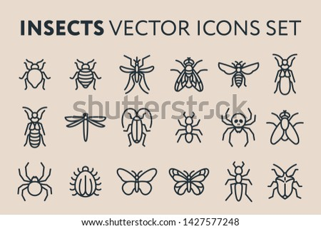 Insect Vector Flat Line Icon Illustration Set. Bed Bug, Fly, Dragonfly, Ant, Roach, Cockroach, Mosquito, Termite, Spider, Butterfly, Bee, Wasp.