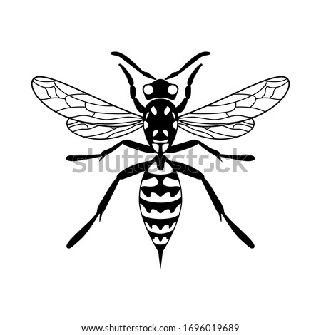 insect wasp icon vector design