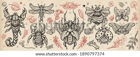 Insects old school tattoo vector collection. Retro Traditional tattooing style. Stag beetle, bee, bumblebee, butterfly, snail, scorpion, ladybug, spider and dragonfly