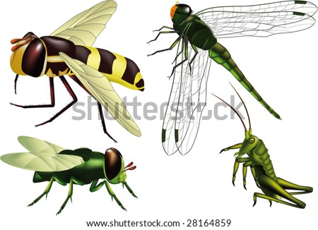 insects wasp  fly  grasshopper  dragonfly
