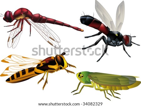 insects wasp fly grasshopper