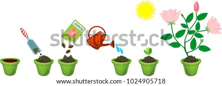instructions on how to plant