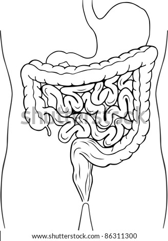 Internal digestive system - stock vector