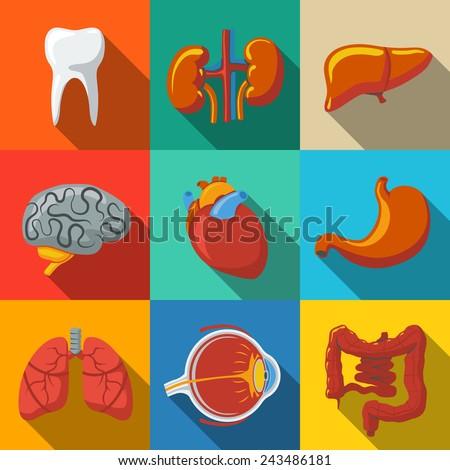 Internal human organs flat long shadow icons set with - heart, brains, lungs, liver, kidneys, intestine, eye, teeth, stomach. Vector