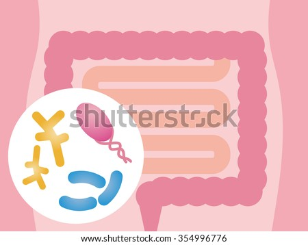 Intestinal flora, Gut flora, enteric bacteria, image illustration
