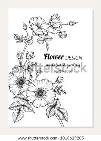 Invitation and greeting card design with Roses flower drawing  illustration.  #1018629205