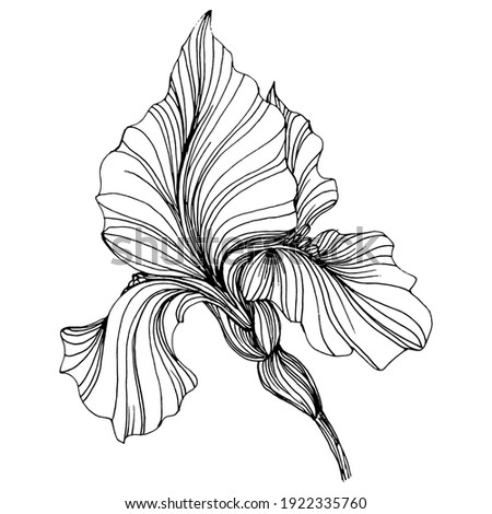 iris flower. Floral botanical flower. Isolated illustration element. Vector hand drawing wildflower for background, texture, wrapper pattern, frame or border. Foto stock ©