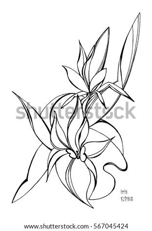 Royalty free blooming asiatic lily flower bouquet 116788252 iris flowers hand drawn vector illustration black outlines on white background template for pronofoot35fo Choice Image
