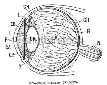 Iris, vintage engraved illustration. Human eye. Dictionary of words and things - Larive and Fleury - 1895.