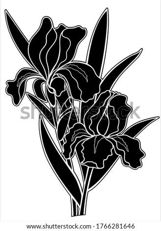 irises flowers black silhouette