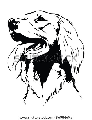 Irish setter dog head - vector illustration