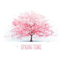 Isolated beautiful cherry blossom tree.
