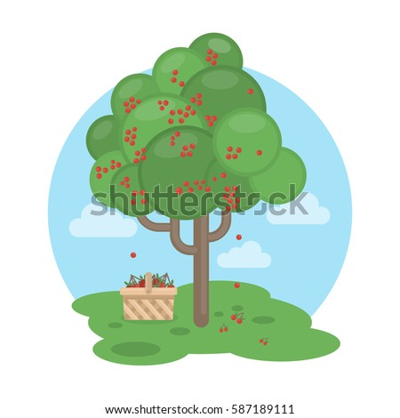 isolated cherry tree with