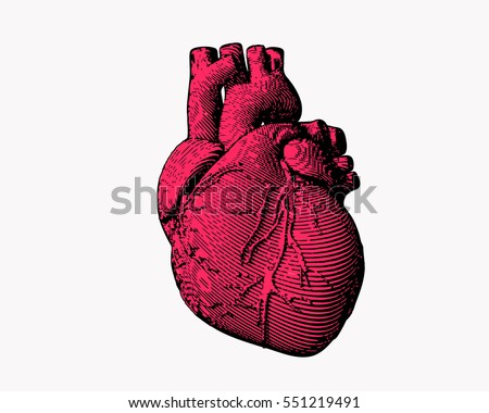 Isolated engraving colorful pink human heart illustration on white background