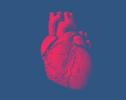 Isolated engraving colorful red human heart illustration on dark blue background