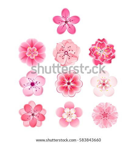 Isolated flowers of sakura set. Cartoon pink and white blossoms of Japanese cherry tree. Vector clip art  illustration.