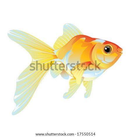 isolated goldfish