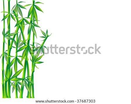 Isolated green bamboo - vector illustration