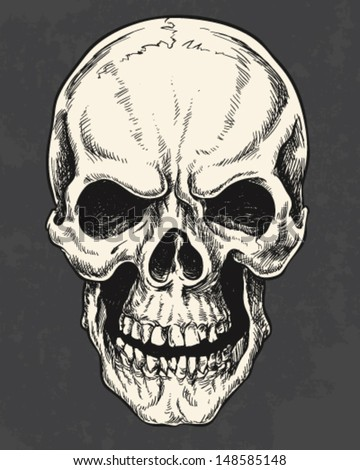 Isolated Hand Drawn Pen and Ink Skull