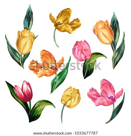 Isolated image of colorful tulips on a white background.