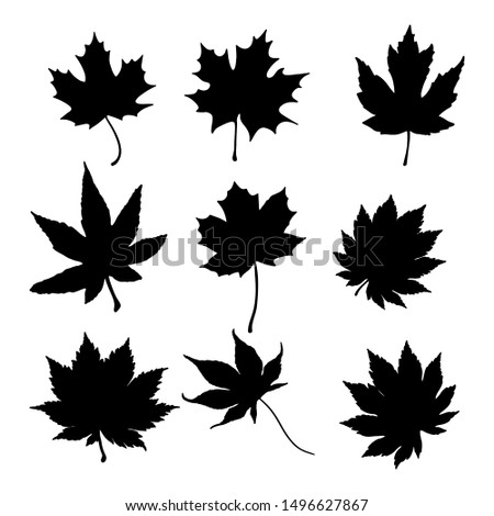 Isolated leaves on the white background. leaves silhouettes. Vector EPS 10.