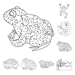 Isolated object of amphibian and animal symbol. Set of amphibian and nature stock vector illustration.