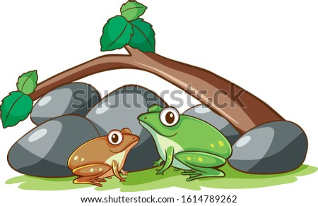 isolated picture of two frogs
