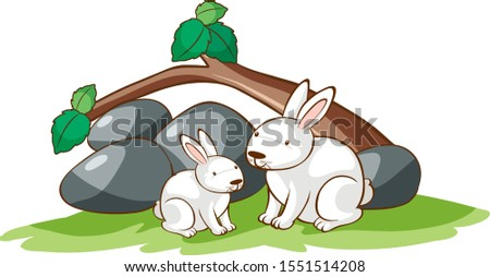 isolated picture of two rabbits