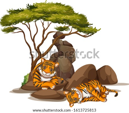isolated picture of two tigers