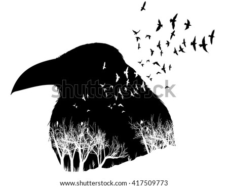 isolated raven illustration