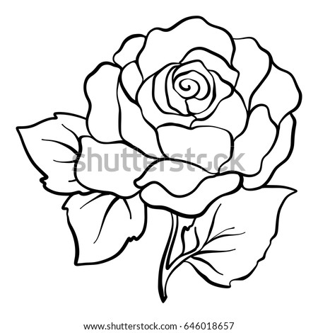 Rose Outline Vector Image Download Free Vector Art