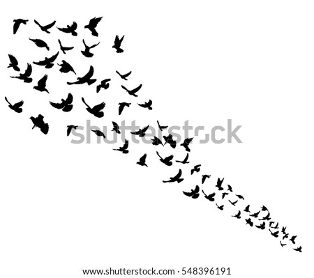 isolated silhouette flocks of