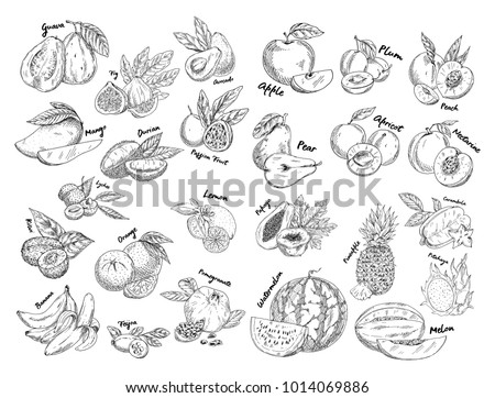 Isolated sketches of fruits. Guava and fig, avocado and apple, plum and peach, mango and durian, passion or dragon fruit, apricot and lemon, pineapple and watermelon. Agriculture and health nutrition