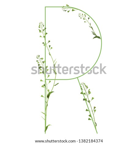 isolated vector illustration