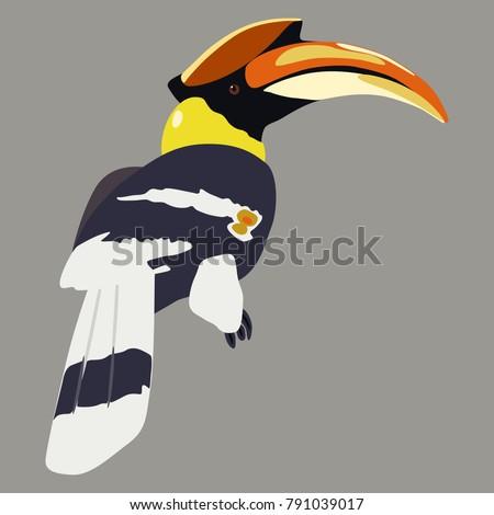 Isolated vector illustration of a tropical kalao or rhinoceros hornbill bird. Flat cartoon style.