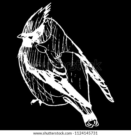 Isolated vector illustration of a waxwing songbird. (Bombycilla garrulus). Hand drawn linear doodle ink sketch. White silhouette on black background.