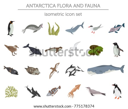 Isometric 3d Antarctica flora and fauna elements. Animals, birds and sea life. Build your own geography infographics collection. Vector illustration