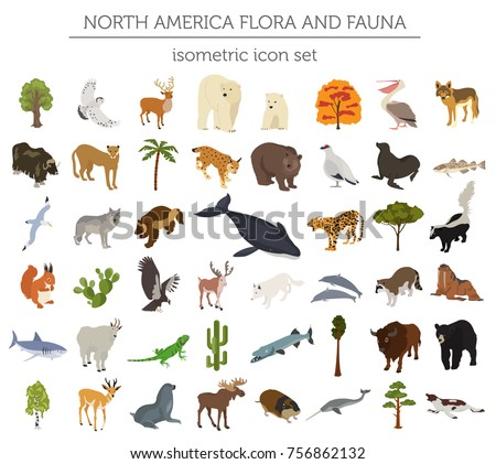 Isometric 3d North America flora and fauna elements. Animals, birds and sea life. Build your own geography infographics collection. Vector illustration