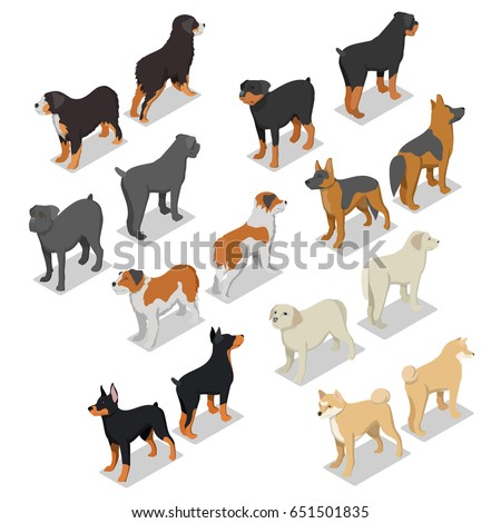 isometric dog breeds with