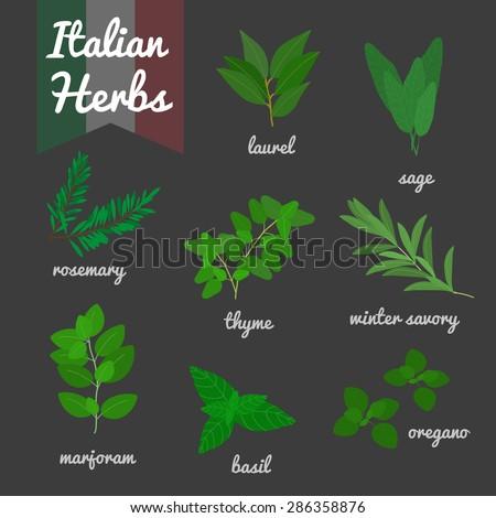 italian culinary herbs set