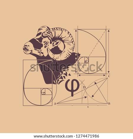 Italian scientist. Leonardo Fibonacci. The law of the Golden section. Spiral in nature.