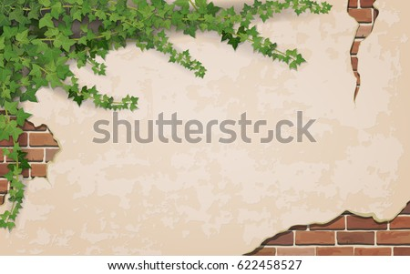 Stock Photo Ivy on weathered wall background with brick masonry.  Vector realistic illustration.