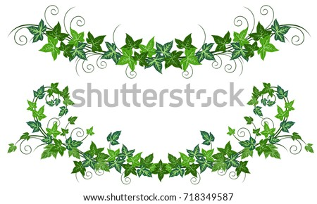Ivy Vines Hedera Helix Realistic Vector Illustrations Of Two Isolated On